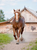 Horse on farm — Zdjęcie stockowe
