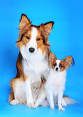Big and small dogs — Stock Photo