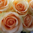 Roses peach avalanche — Stock Photo #11830985