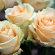 Roses peach avalanche — Stock Photo #11935570