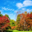 Autumn landscape — Stock Photo #11688825