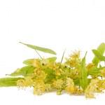 Flowers of linden tree — Stock Photo