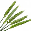 Green wheat ears isolated — Foto de Stock