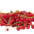 Red currant isolated - Stockfoto