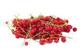 Red currant isolated — Stock Photo