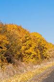 Golden autumn landscapes — Stock Photo