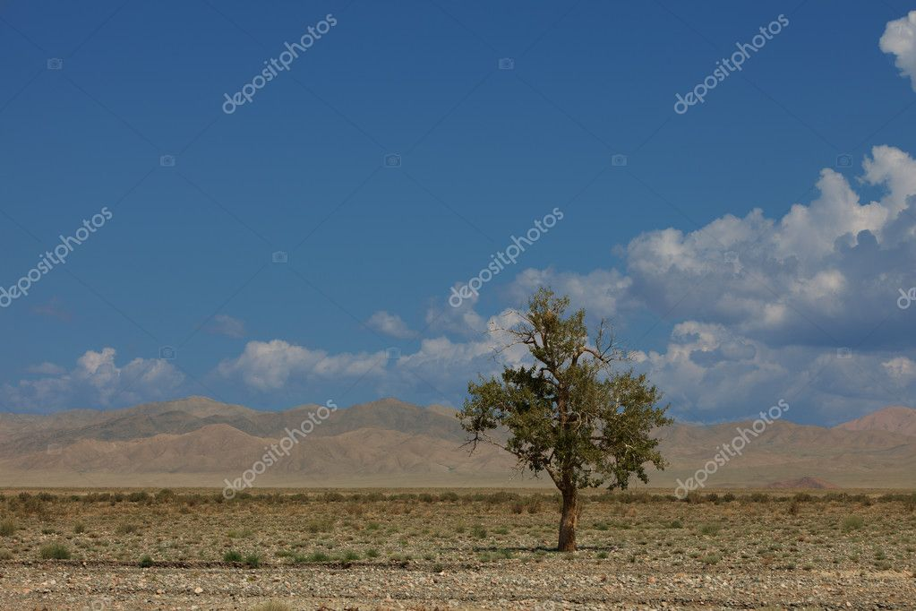 Lonely tree in mountains. Mongolia — Stock Photo #12205829