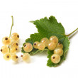 Berries of a white currant with leaf — Stock Photo