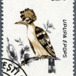 ROMANIA - 1993: shows Hoopoe (Upupa epops) — Stock Photo