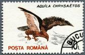 ROMANIA - 1993: shows Golden Eagle (Aquila chrysaetos) — Stockfoto