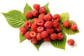 Fresh raspberries with leaves — Stock Photo