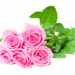 Beautiful pink roses — Lizenzfreies Foto