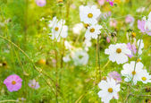 White beautiful flowers on the green background. — Foto Stock