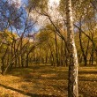 Stock Photo: Golden evening forest