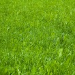 Green grass background — Stock Photo #11352681