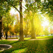 Low setting sun in green park casting long shadows — Stock Photo