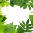 Fresh green leaves border — Stock Photo