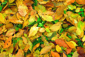 Yellow leafs — Stock Photo