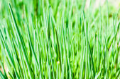 Long grass meadow closeup — Stock Photo