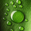 Water drops on leaf — Stock Photo #11171765