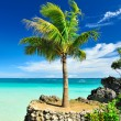 Palm tree — Stockfoto