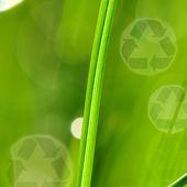 Mañana la hierba y reciclar insignia — Foto de Stock