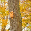 Bird house in autumn forest - Stockfoto