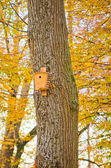 Bird house in autumn forest — Stock Photo