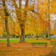 Autumn in the city park — Stock Photo