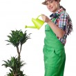 Girl watering plants on white — Stock Photo #12025510