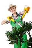 Woman gardener trimming plans on white — Stockfoto