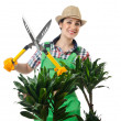 Stock Photo: Womgardener trimming plans on white