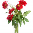 Red dahlias — Stock Photo #11542754