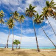 Palm trees beach — Stock Photo