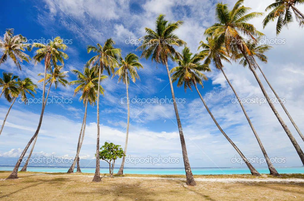 Palm trees on beach at Moorea island — Stock Photo #12208736