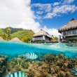 Moorea landscape - Photo