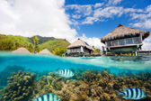 Moorea landscape — Stock Photo