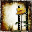 Grunge background with film-strip and rose — Stock Photo