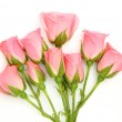 Pink roses — Stock Photo #11102557