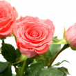 Pink roses — Stock Photo #11282800