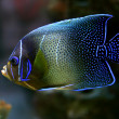 Tropical fish — Stock Photo #10947598
