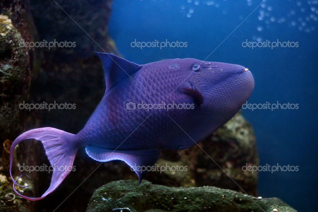 Tropical fish — Stock Photo #10947608