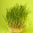 Green wheat — Stock Photo #11239530