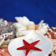 Seashells and sestars - Stock Image — Stock Photo #11974617