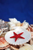 Seashells and sea stars - Stock Image — Stock Photo