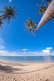 Palm trees on the sand beach — Stock Photo