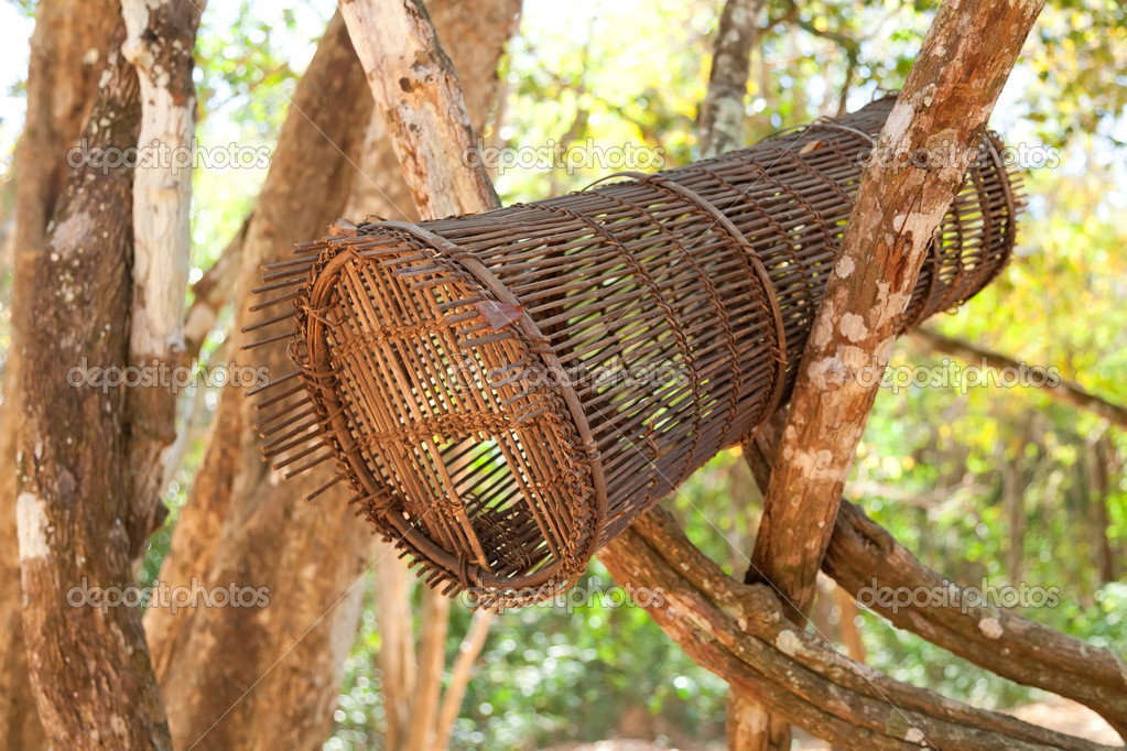 Open birdcage in the tropical forest with beautiful bokeh  Stock Photo #11407291