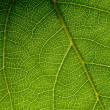 Green leaf macro - Stockfoto