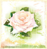 Vintage illustration of pink rose — Stock Vector