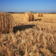 Rick gathered wheat in the sun — Stock Photo